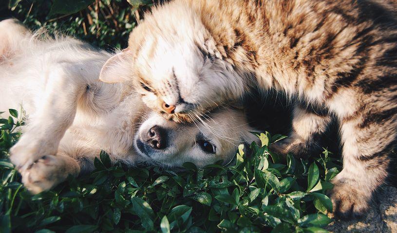 A háziállat portál a gazdik kedvence