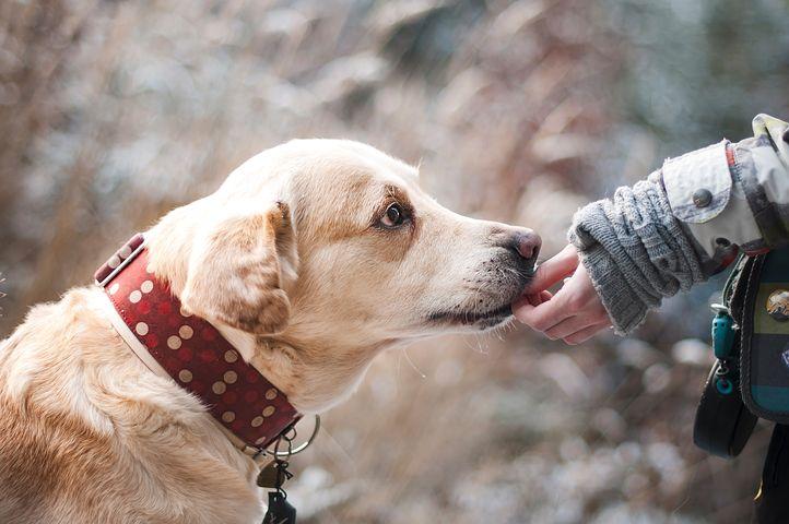 Válasszuk a száraz kutyatápot kis kedvencünknek!