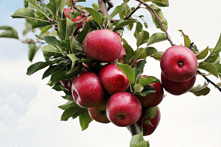Simon gyümölcs a természetesség jegyében